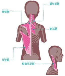 巻き肩 筋肉
